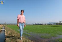 Cánh đồng lúa nước ở huyện Lăk